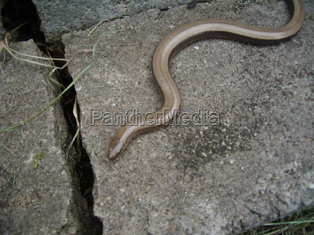 the little snake 1