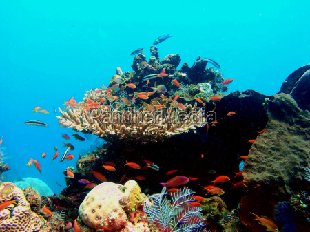 corals, with, fish - 109611