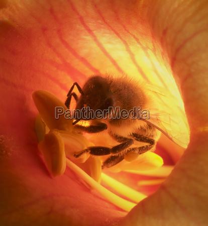 bees, sky - 121731