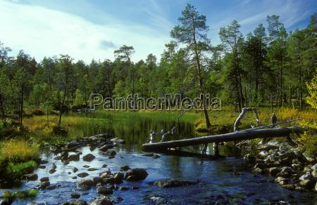 øvre, pasvik, national, park - 136810