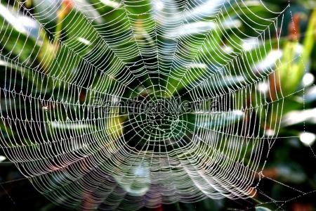 spider, web - 137917