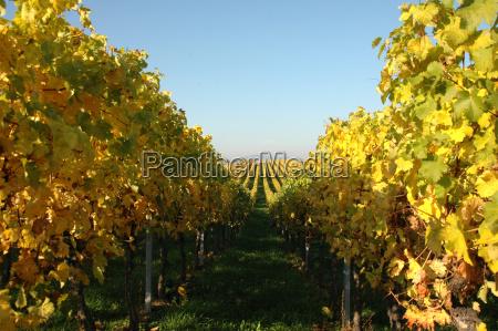 wine, in, autumn - 160223