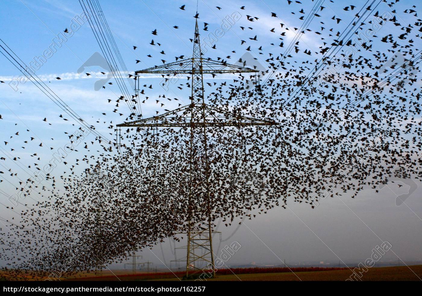 the, birds - 162257
