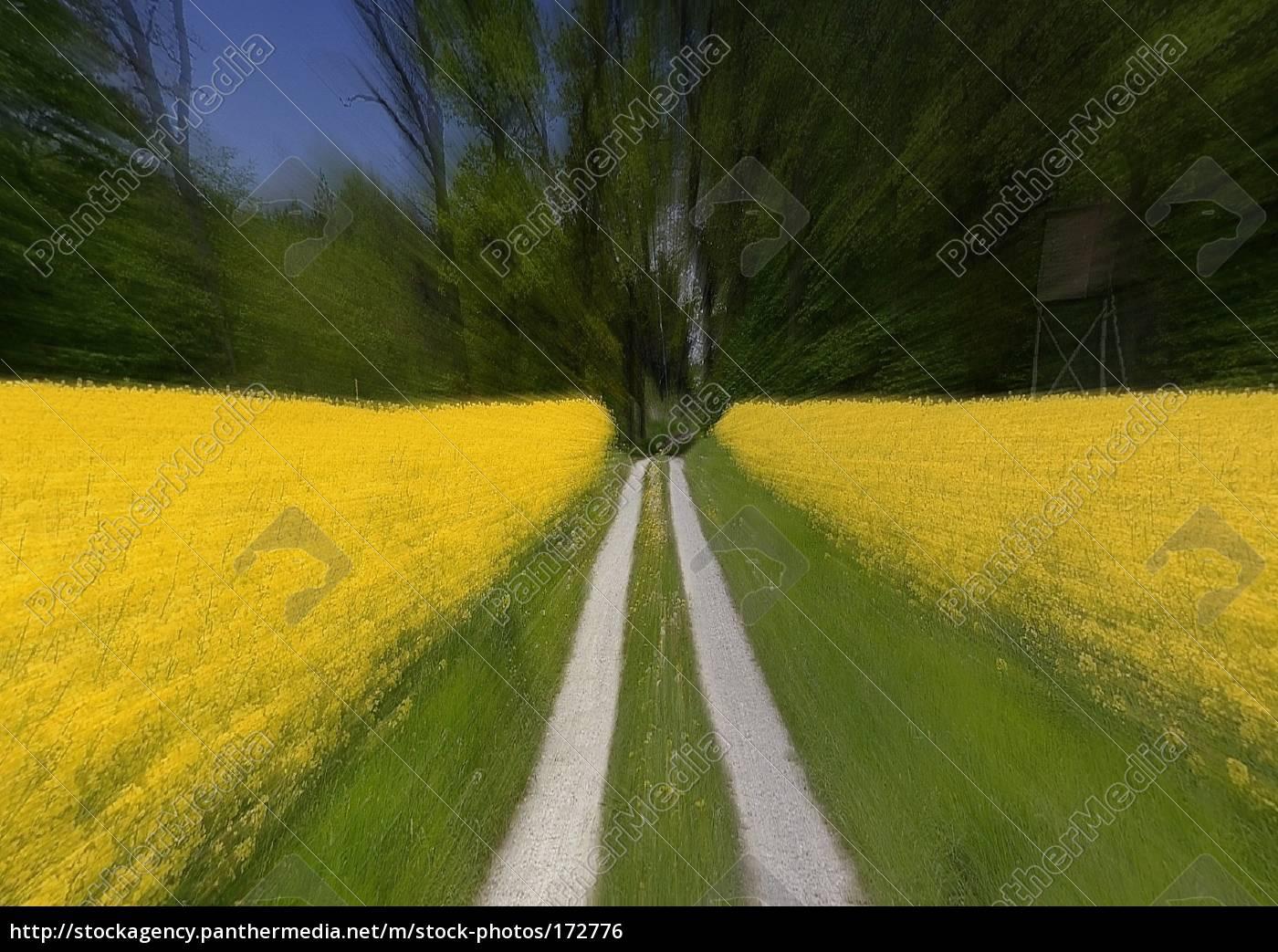 speed - 172776
