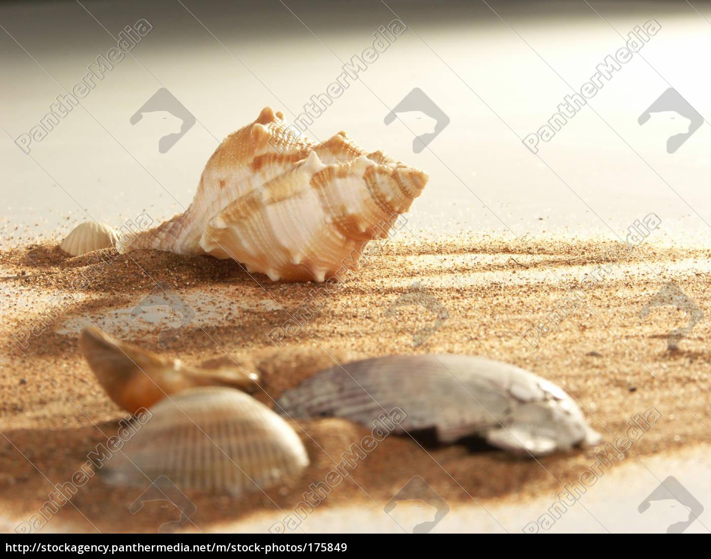sandy, beach, mood - 175849