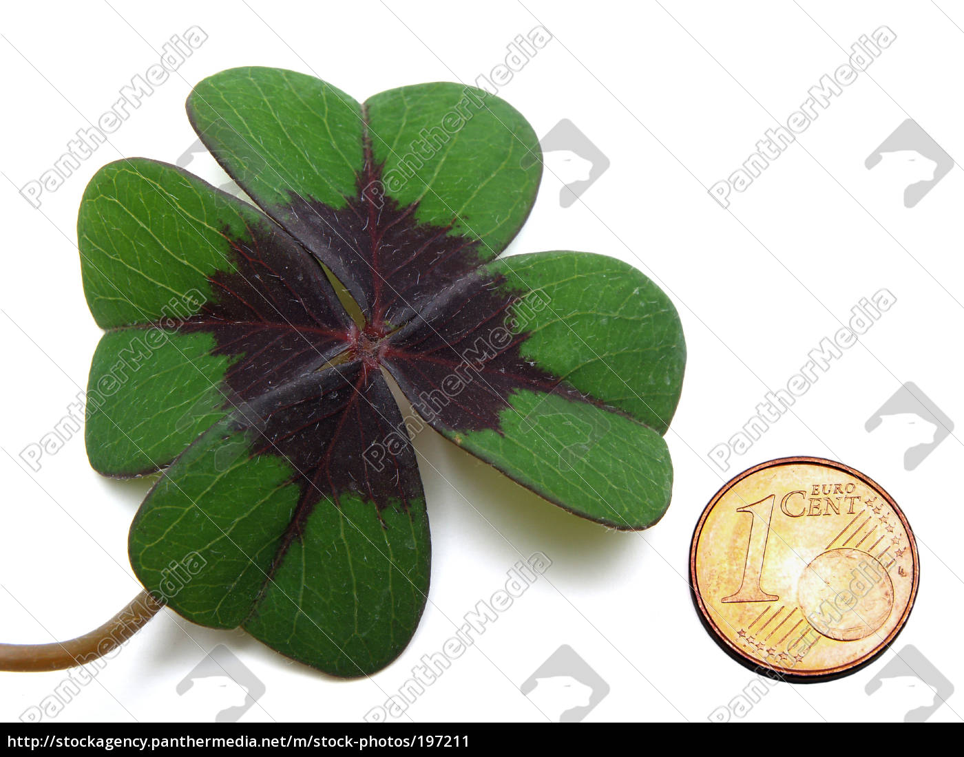 lucky, clover, with, lucky, penny - 197211