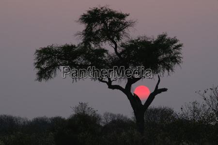 kalahari, sunset - 200488