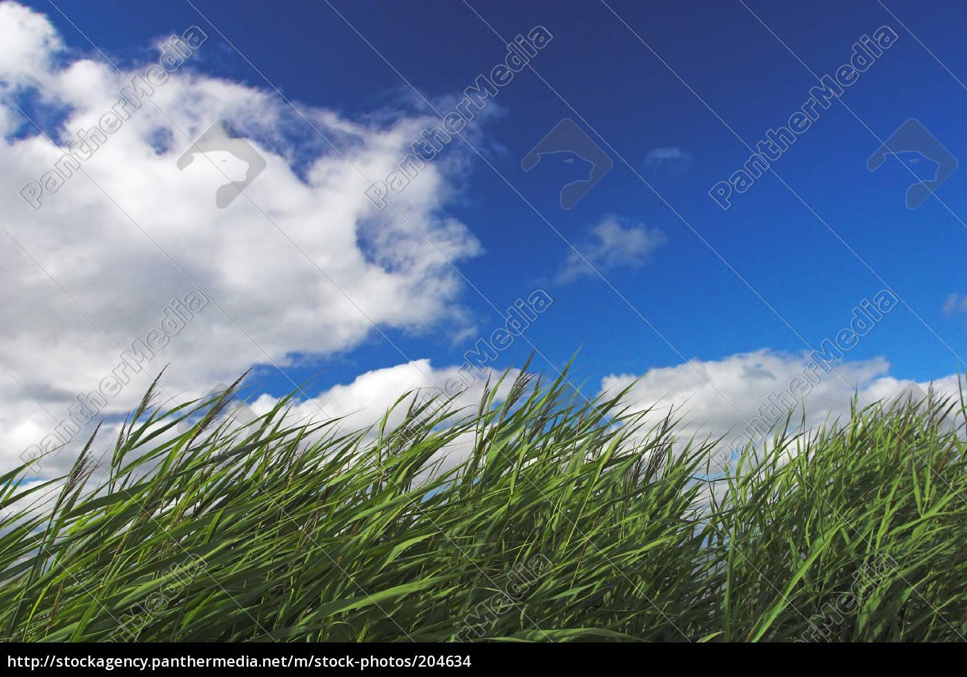 wind, (03133) - 204634