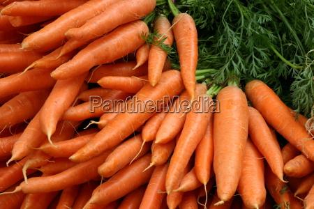 carrots - 221459