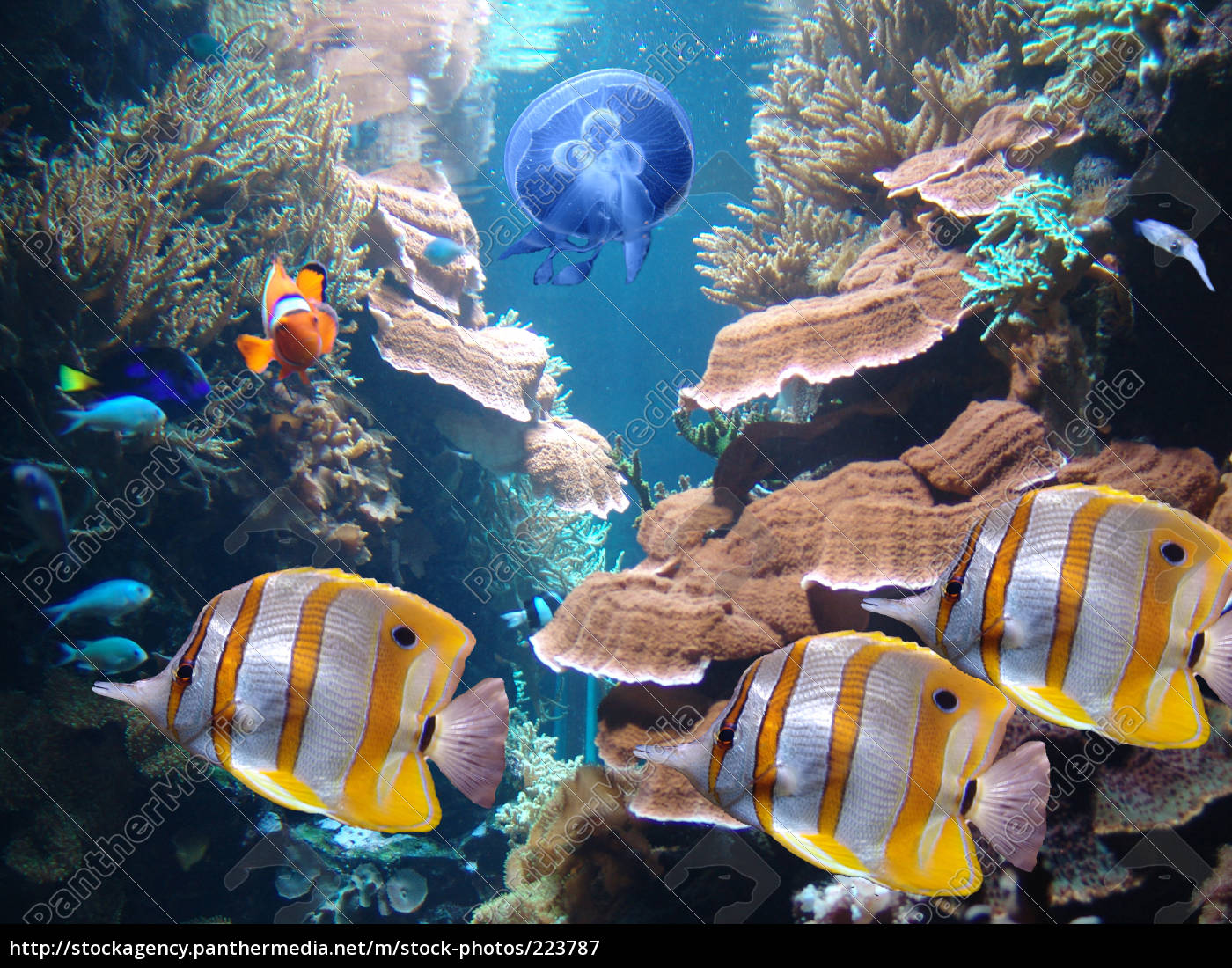colorful, life, in, the, underwater, world - 223787