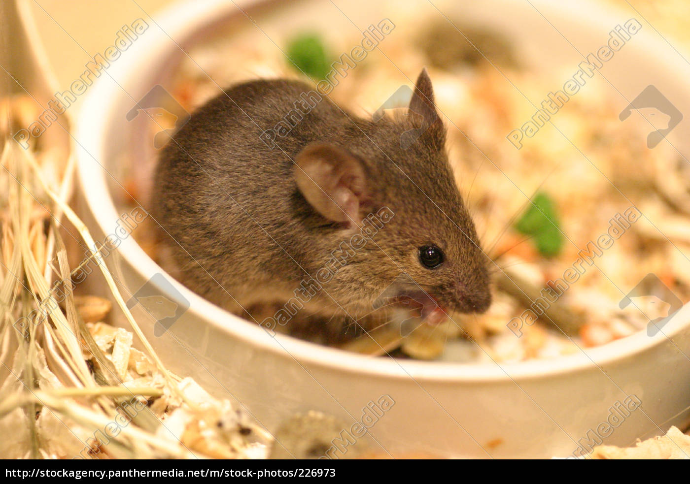 baby, mouse - 226973