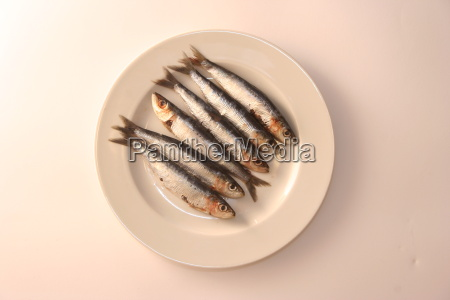 white, plate - 247327