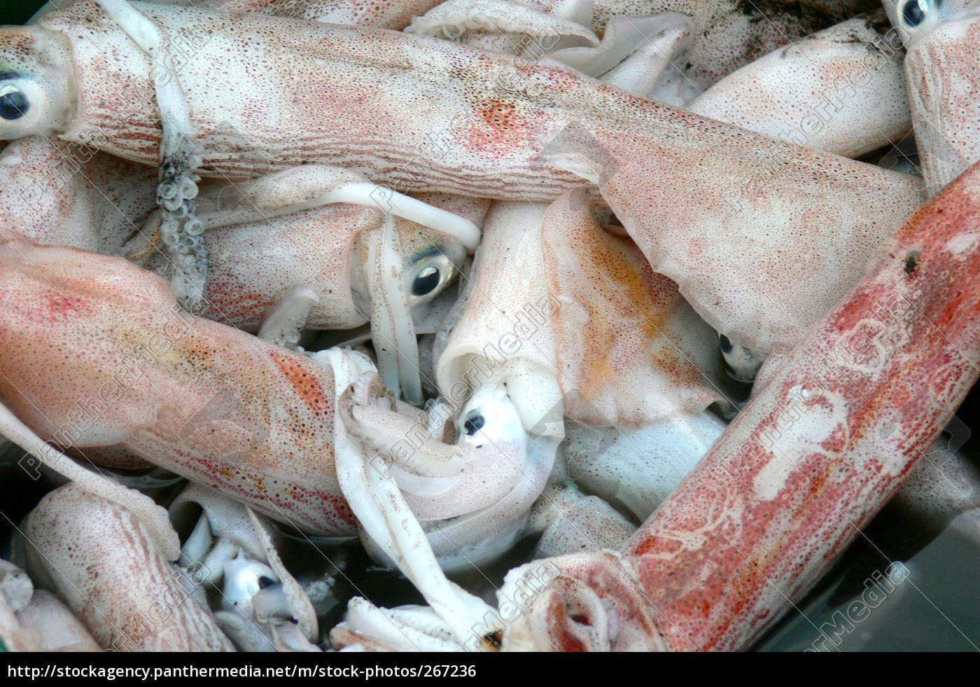 squid - 267236
