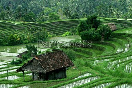 rice, terraces, 2 - 269582