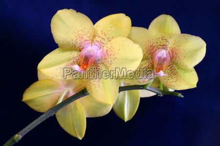 orchidaceae, (16) - 272509