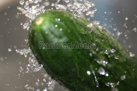 the, cucumber - 272293