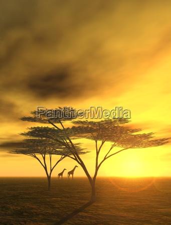 evening in africa