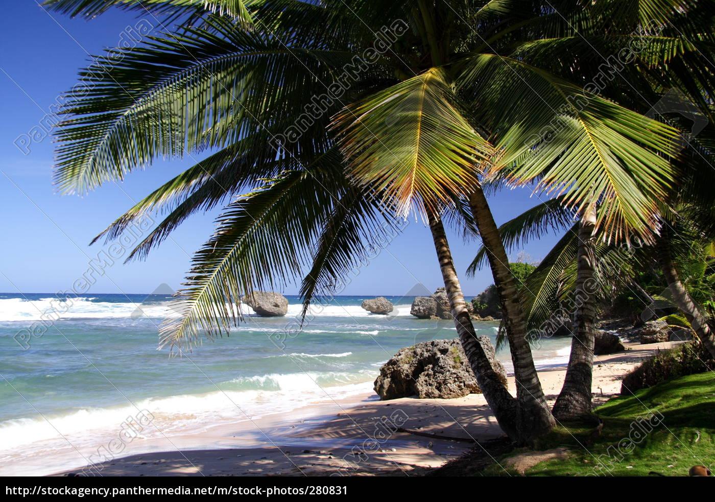 tropical, beach - 280831