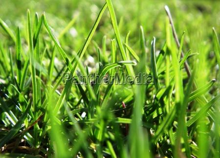 grass green no 2