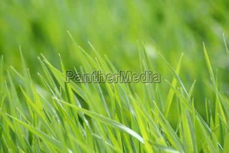 grass, in, the, sunshine - 291670