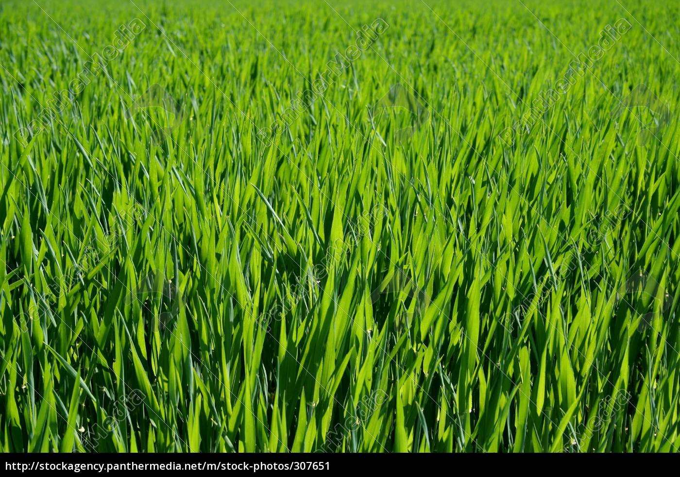 green, spirit - 307651
