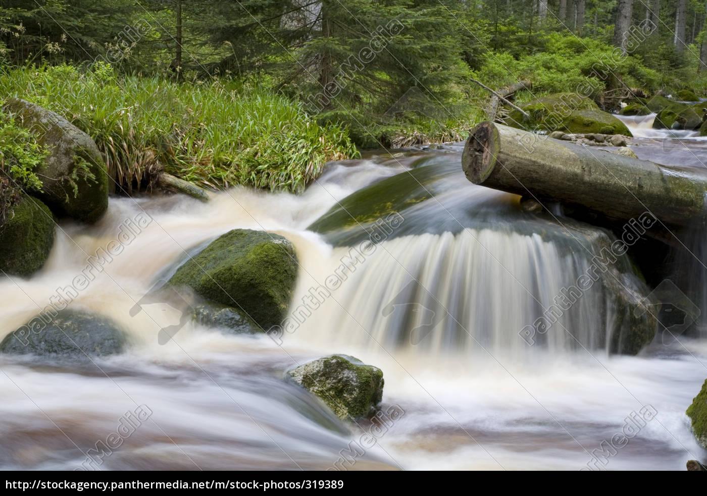 wildbach, idyllic - 319389