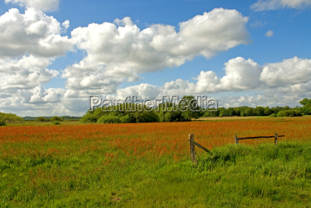 meadow, with, fence - 320474