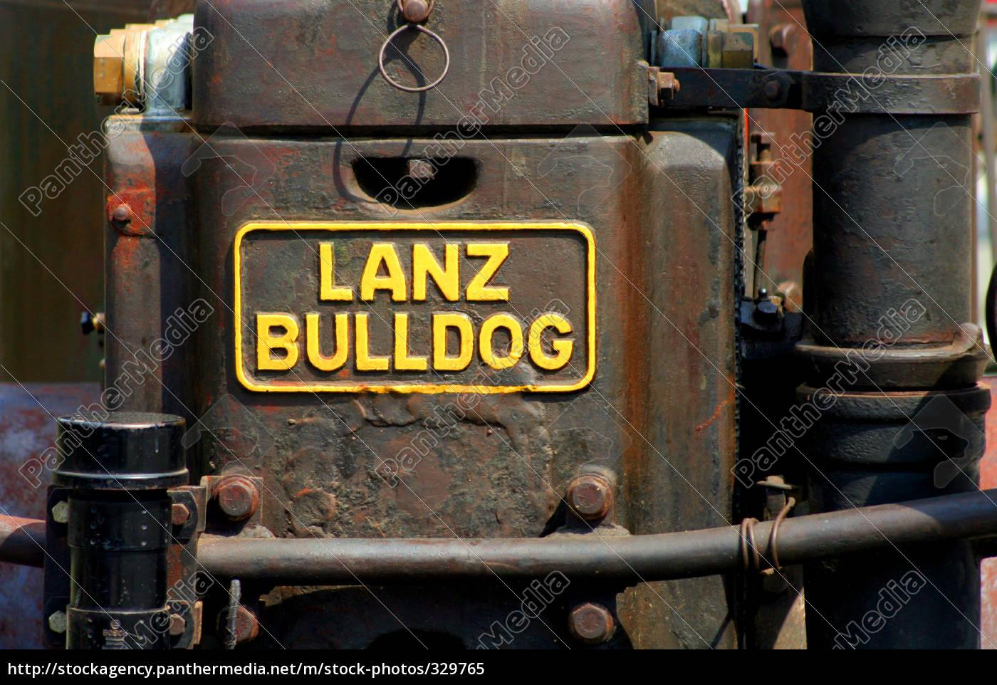 bulldog - 329765