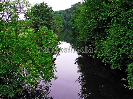 tree trees mirroring bushes berries idyll