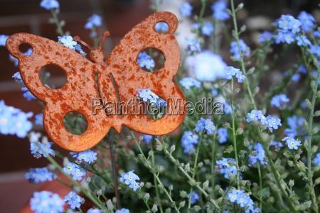 butterfly figure in blumenstock