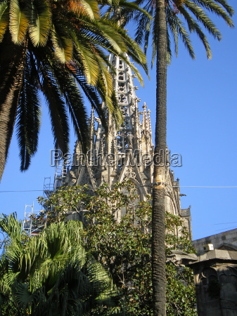 church cathedral spain palms barcelona palmtrees