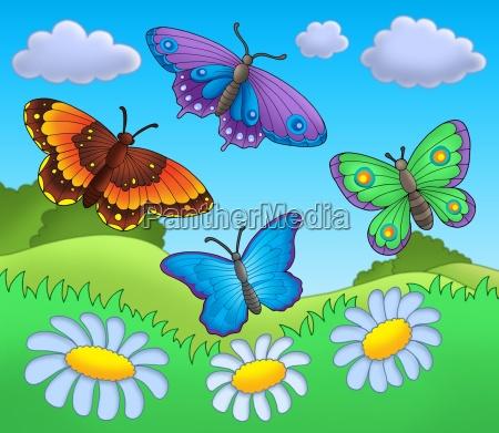 butterflies on meadow