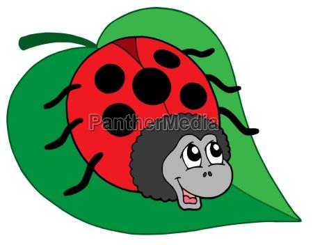cute ladybug on leaf