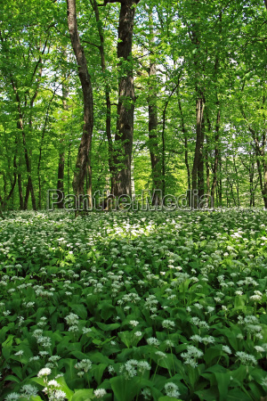 a beautiful green forest with many