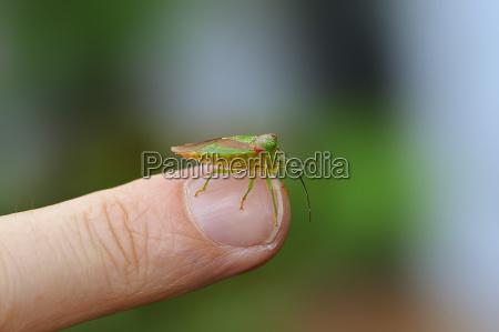bug on the finger
