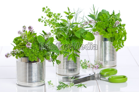 fresh herbs in recycled cans