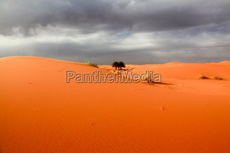 desert wasteland africa palms dunes morocco