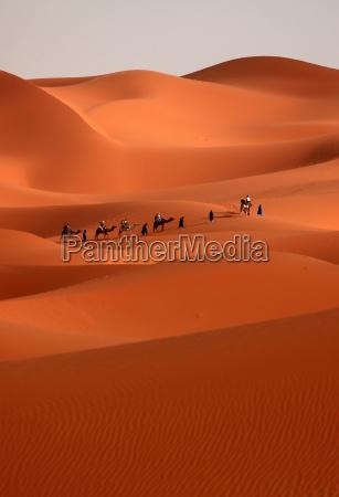 desert wasteland dune morocco sahara karavane