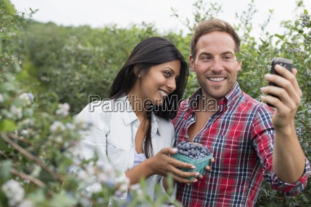 blueberry plants bearing fruit two people