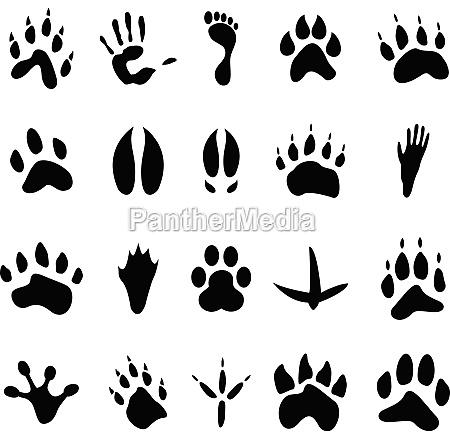 collection of 20 animal and human