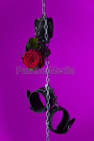 handschellen und eine rose an einer