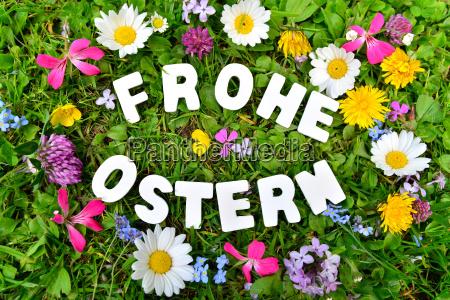 happy, easter, on, flower, meadow - 14251013