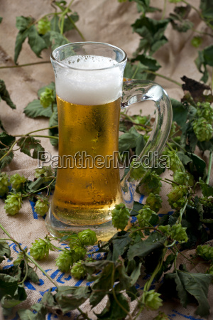 bier im krug auf hopfen