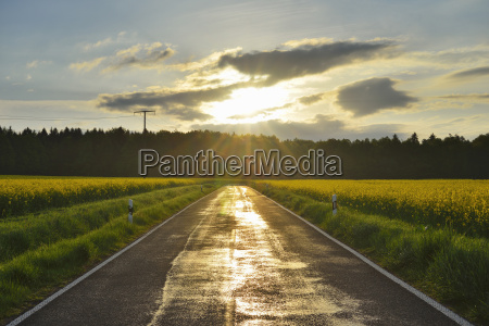 rural road with canola field and