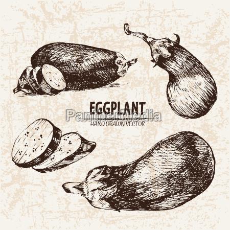 digital vector detailed line art eggplant