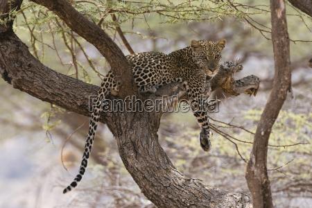 paseo viaje color arbol africa kenia